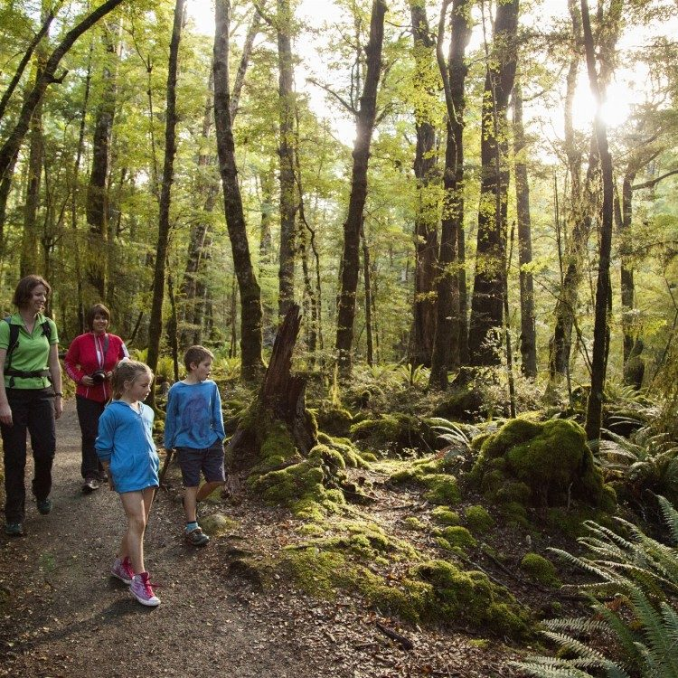 Stroll along the Kepler Track at an easy going pace with your friendly guide
