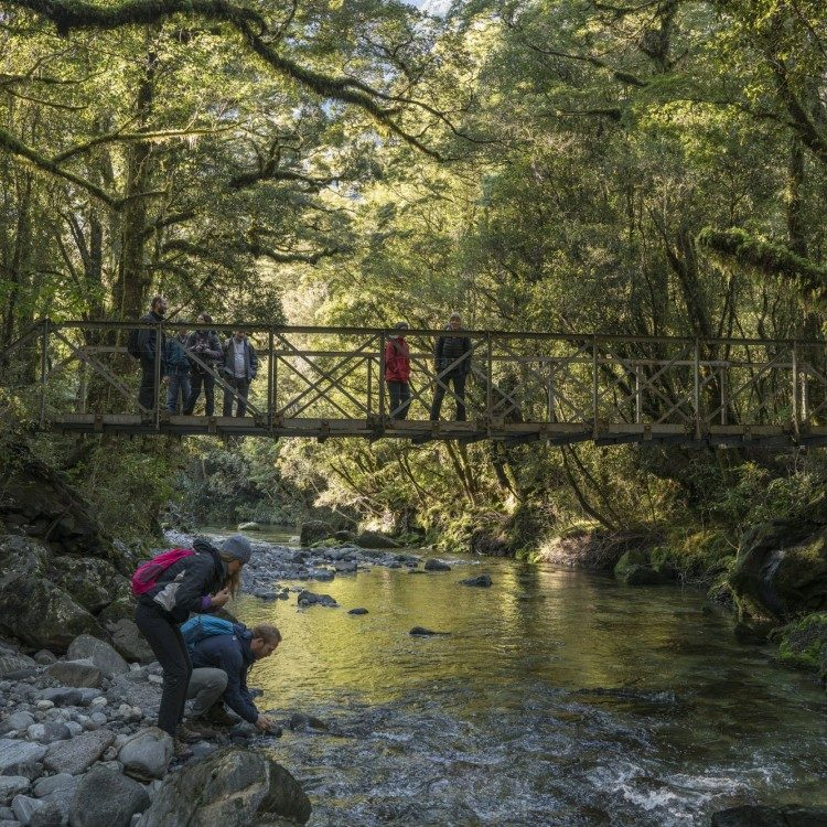 Camp Oven creek along the Milford Track offers a great exploration point on your guided walk.