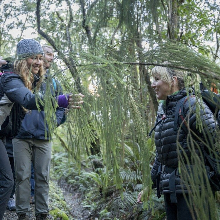 Interpretation along the Milford Track by a local guide ensures you learn more about the Fiordland environment.
