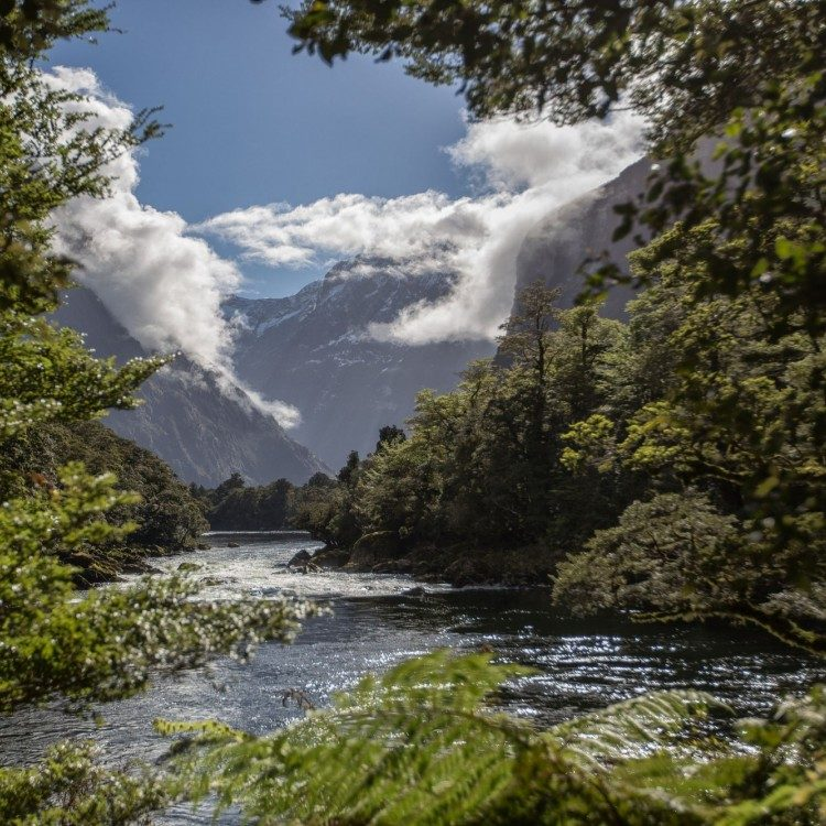 Looking back towards Milford Sound down the Arthur River on the Milford Track