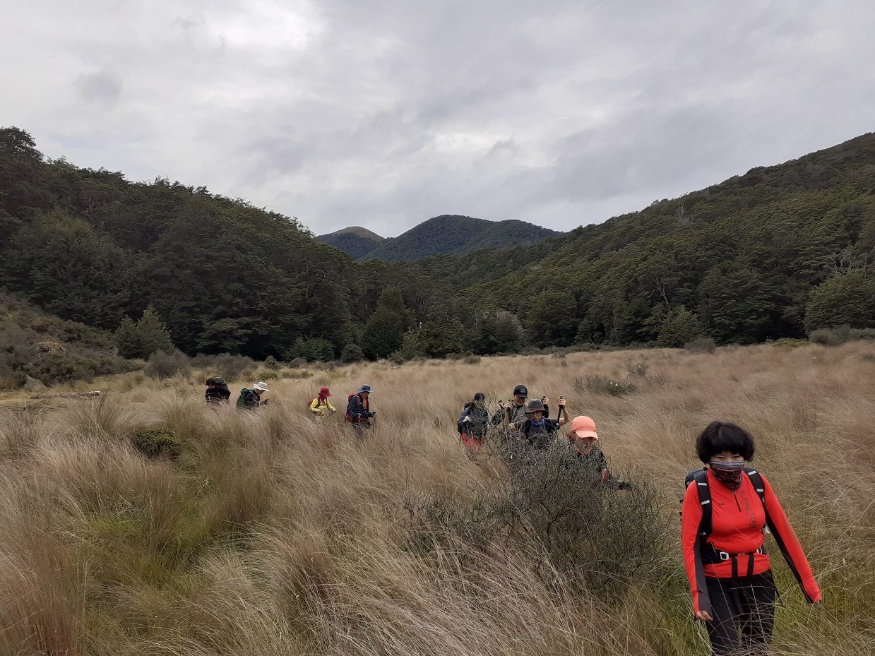 Group of people hking through tussock grass