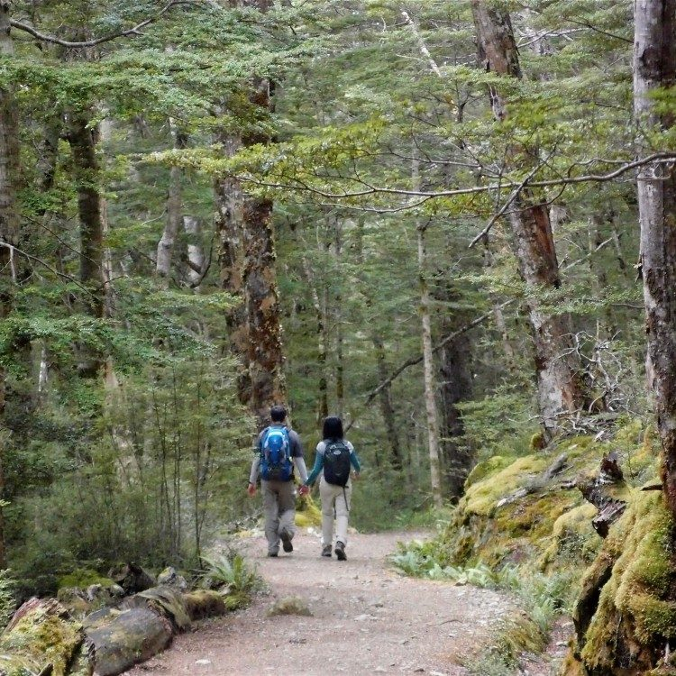 Hike through the forest  on the descent from Mt Luxmore