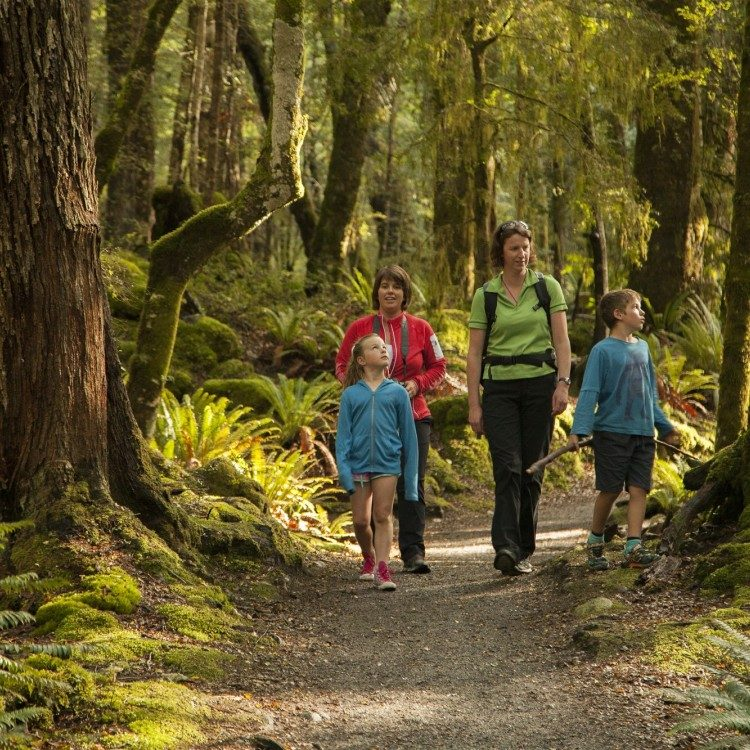 The Kepler half day walk offers a great family experience
