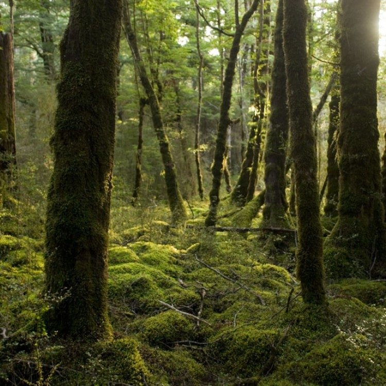 The moss Kepler forest is a photographers's delight