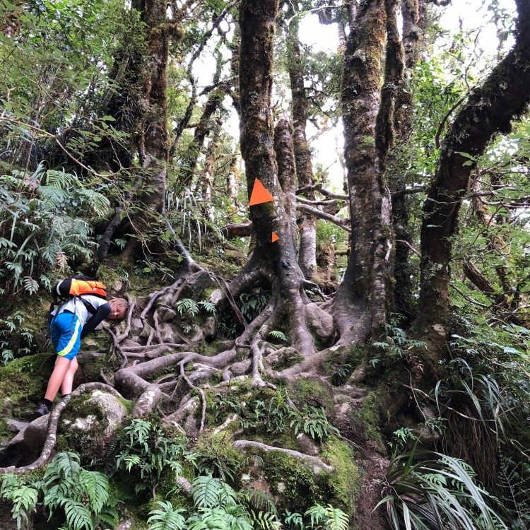 The trail to Lake Marian gets interesting at times, here tree roots provide a natural staircase!