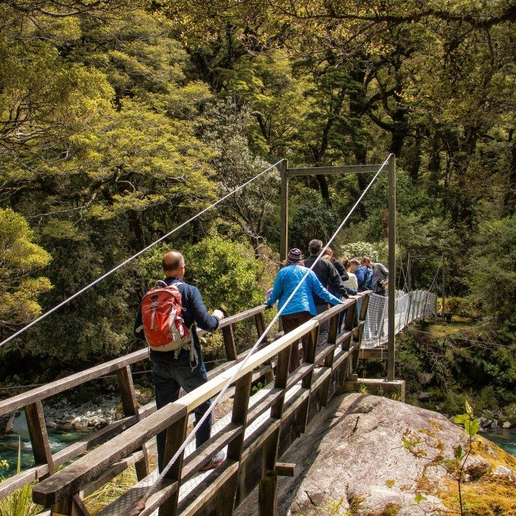 Cross a swing bridge over the Hollyford River on your Milford tour.