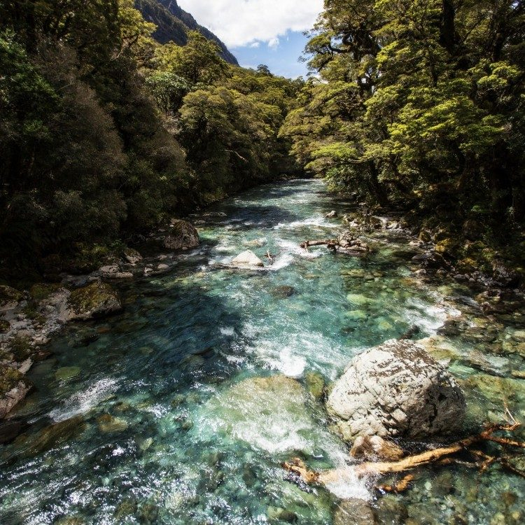 Cross the Hollyford River to begin your hike