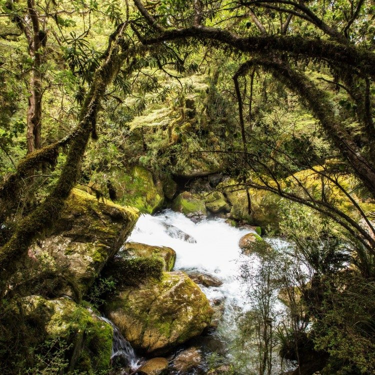 Lush forest along the Marian Gantry brings some wonderful sights