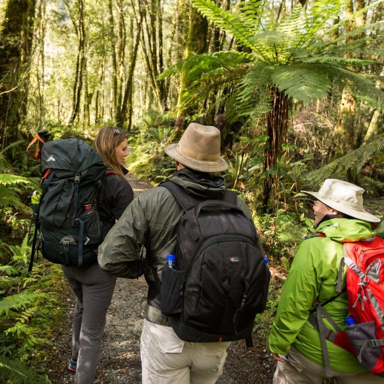 Ancient tree ferns adorn the Milford Track