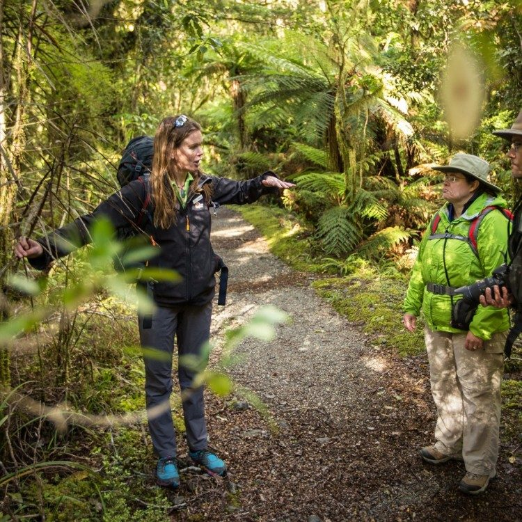 Let our guides share their vast knowledge with you on the Milford Track