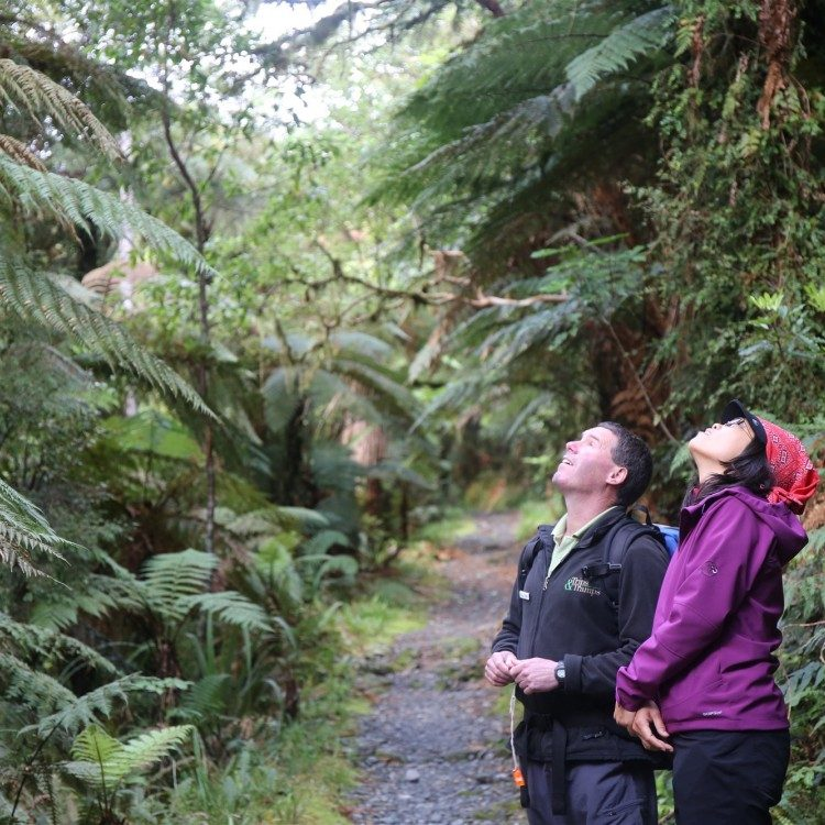 Bird watching on the Milford Track