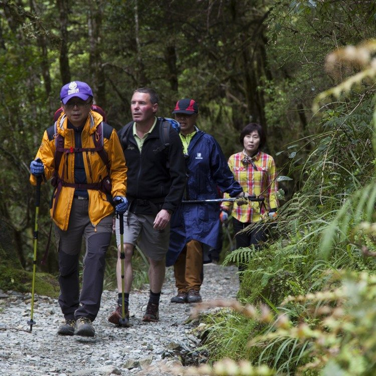 Ascending the Routeburn Track through the ancient forest