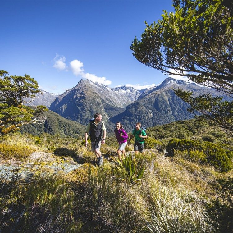 Hike through the alpine vegetation on the tops with your guide